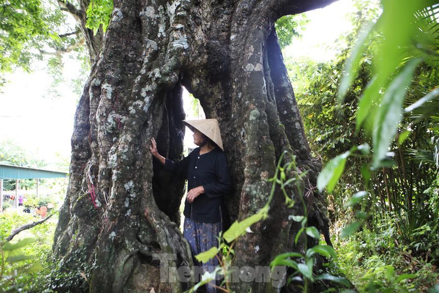 """Lạ kỳ cây thị """"ăn thề"""" 700 trăm năm rỗng gốc ở xã Kim Hoa, Hương Sơn, Hà Tĩnh"""