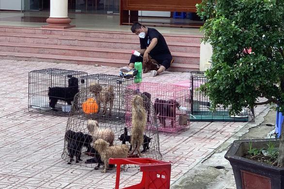 Biên Hòa: Chủ đi cách ly, phường đón 12 con chó về trụ sở nuôi giùm - ảnh 1