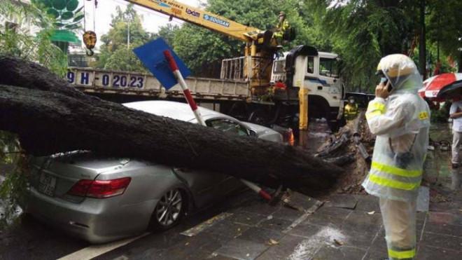 Xe ô tô Camry bẹp rúm, bánh xe phát nổ sau khi bị cây cổ thụ đổ trúng - ảnh 1